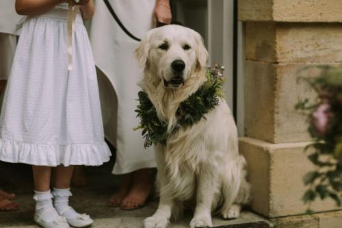 Dog's Garland - Photo Esme Ducker Photography